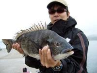 黒鯛49.5cm
