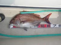 W氏68cm