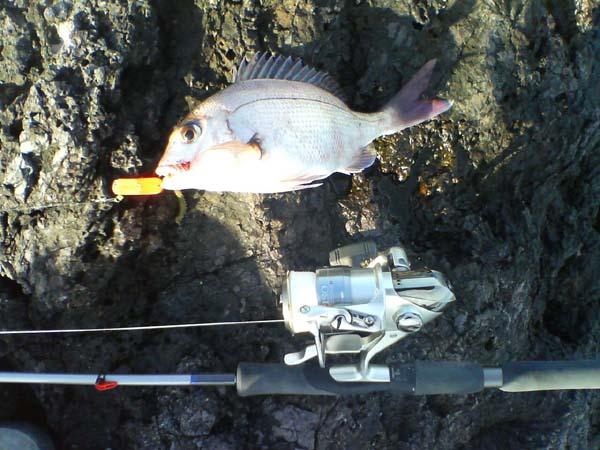 ブラー真鯛/30cmゲットォ